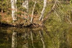 Baumgruppe mit Spiegelung