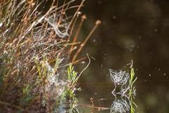 Spinnennetz samt Spiegelung
