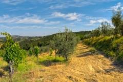 Weingärten, Toscana, I