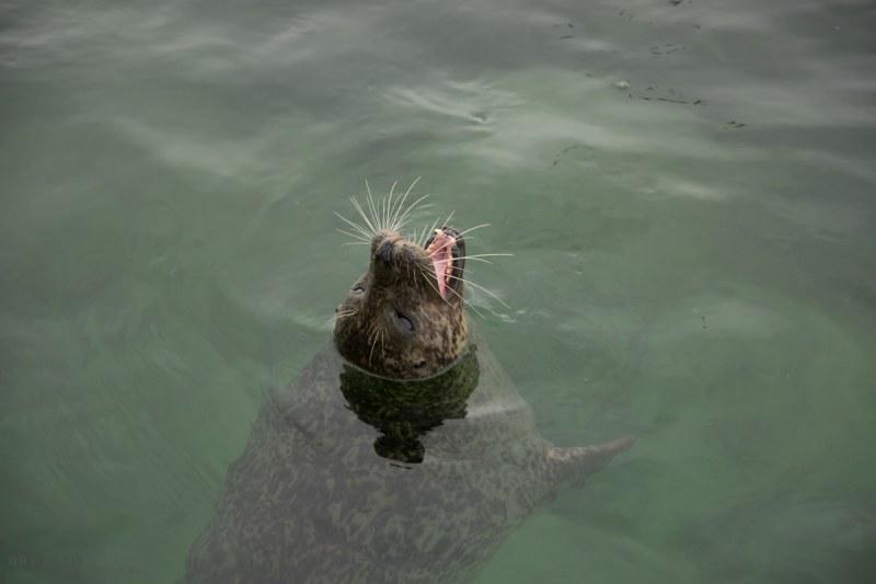 Seehundstation Friedrichskoog